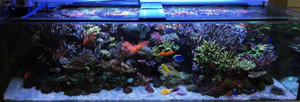 Martins Meerwasseraquarium im März 2015