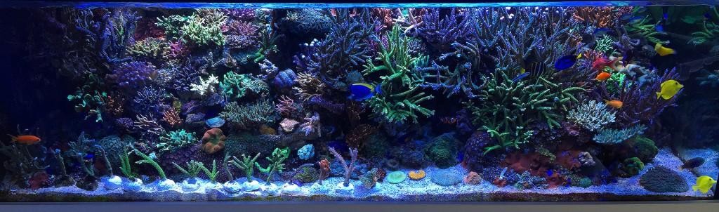Meerwasser-Aquarium mit Korallenablegern auf dem Sand